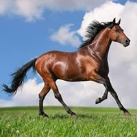 Horse World Sales