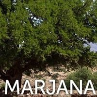 Coopérative Marjana - Huile d'Argan