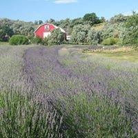 Annie's Lavender