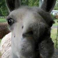 StillPointe Llama Sanctuary & Educational Organization