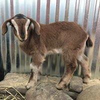 Debbie Dolittle's indoor petting zoo, pony & unicorn rides