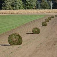 Braun Turf Farms