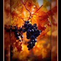 Copper Mountain Vineyards