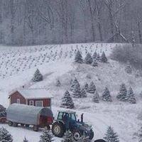 Nicklas Tree Farms