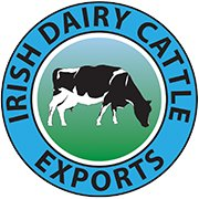Irish Dairy Cattle Exports