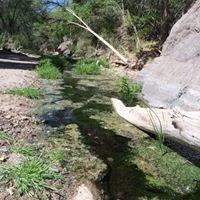 Cienega Creek Natural Preserve