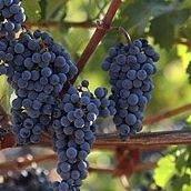 Temecula Wine Tasting & Tours