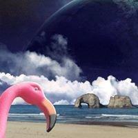 Flamingo Jim's