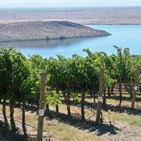 Discovery Vineyard