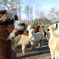 Fox Wire Farm Alpacas