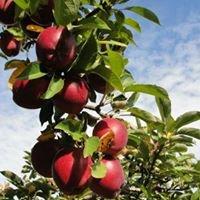 Nieman Orchards