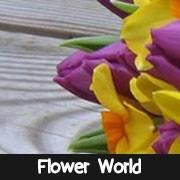 Flower World of York