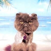 Java Cat & Dog Spa