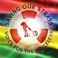 Saving Our Strays ( SOS ) - Dogs Of Mauritius