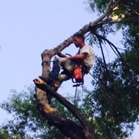 Cook's Lawn & Tree Service