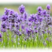 Lavender's Day Spa