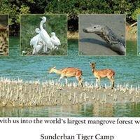 Sunderban Tiger Camp