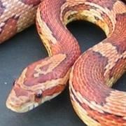 Bay Area Reptile Events