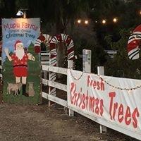 Mupu Farms Christmas Trees