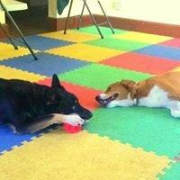 Epona Pet Care LLC