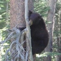 Little Bear Books Lake Tahoe