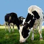 Karl's Farm Dairy