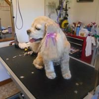 Cindy's Grooming Style's
