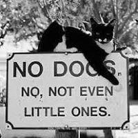 Cat Clinic of Woodstock