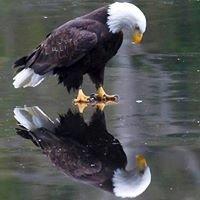 Paradise Eagles #2960