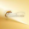 Studio Urody Cameleonia