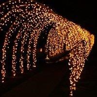 Yolanda Lights