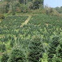 Greenpoint Trees LLC.