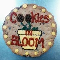 Cookies in Bloom - Mckinney