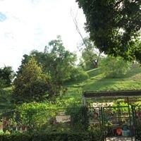 Woodgrove Community Garden (Page)