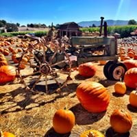 The Solvang Farmer Pumpkin Patch