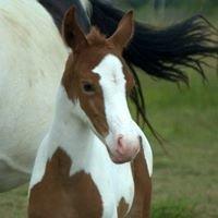 Apacheblu Ranch