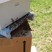 Happy Hills Bees
