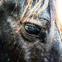 Equine Assisted Guidance & Learning Experience - EAGLExp