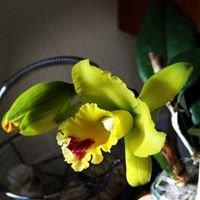 San Fernando Valley Orchid Society
