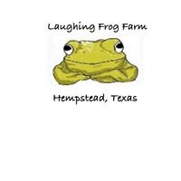 laughing frog farm