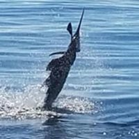 FoxSea Charters Sport Fishing