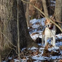 Chippewa Valley Kennels