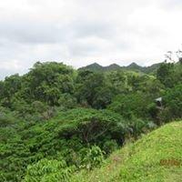 Plantacion EdenO