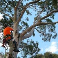 Agility Professional Tree Service Pty Ltd