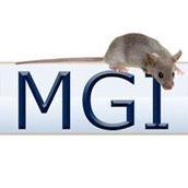 MGI (Mouse Genome Informatics)