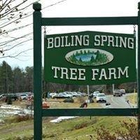 Boiling Spring Tree Farm