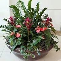 Botanika Interior Plantscapes