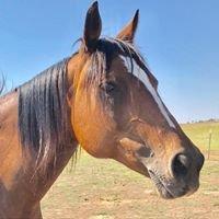 Easy R Equine Rescue