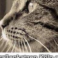 Straßenkatzen Köln e.V.