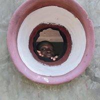 Africabougou Onlus